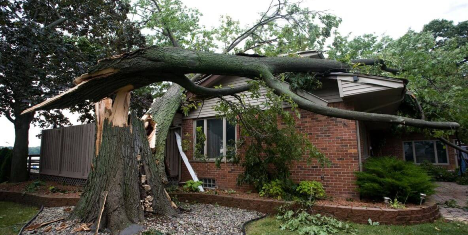Emergency Tree Service Pittsburgh